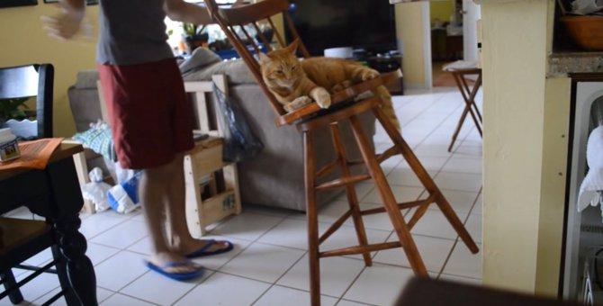 優れたバランス能力!不安定な椅子を12秒キープする猫ちゃん