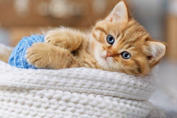 猫パルボにタミフルが効く?!今後の研究でパルボウイルスの治療に変化があるかも