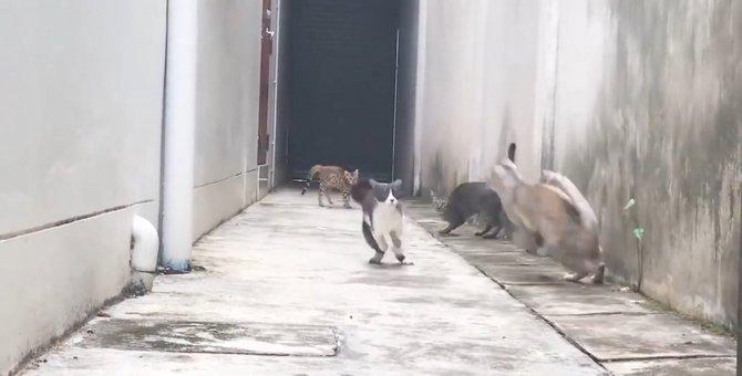 映画のワンシーン?!囲まれた敵の間を華麗に通る猫ちゃん