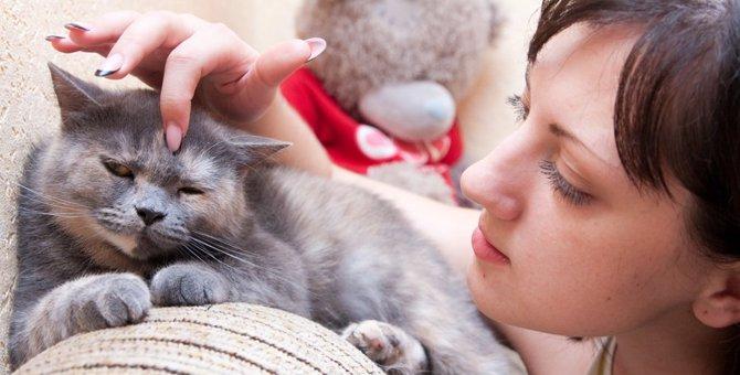 猫にしこりがある時に考えられる病気