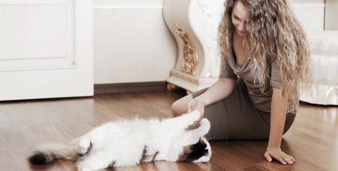 猫専門のペットシッター「キャットシッター」の料金と探し方や選び方