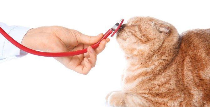 猫を『動物病院へ連れて行くタイミング』は?迷わず受診すべき6つの症状