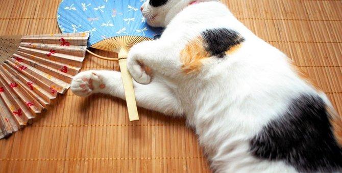 猫の耳が熱い7つの原因と対策