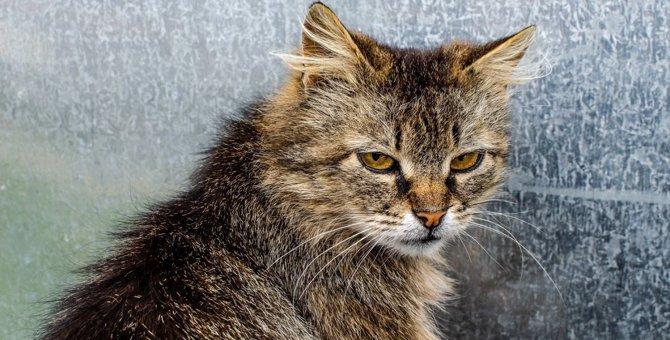 もしかして猫に嫌われてる?チェックすべきサイン3つ