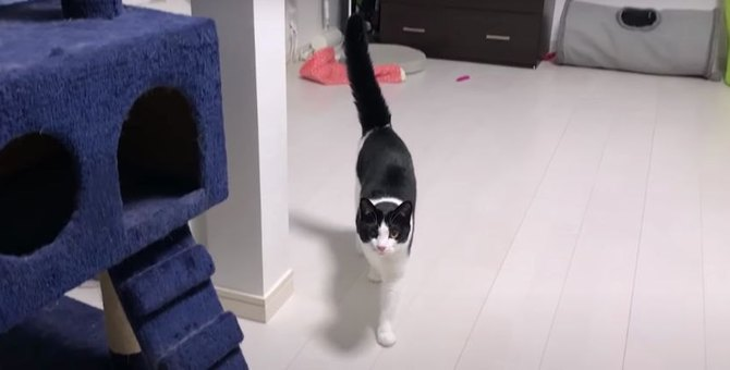 猫ちゃんのひとり遊び♪テンション上がってしっぽぶわっ!