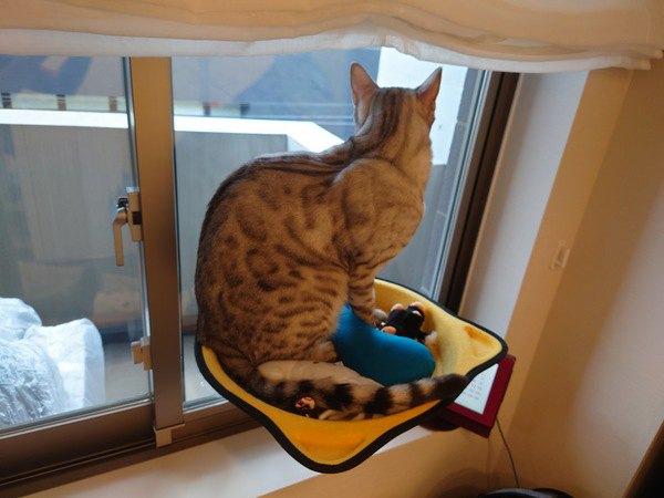 【2月22日は猫の日】猫の驚くべき『ギネス世界記録』5選