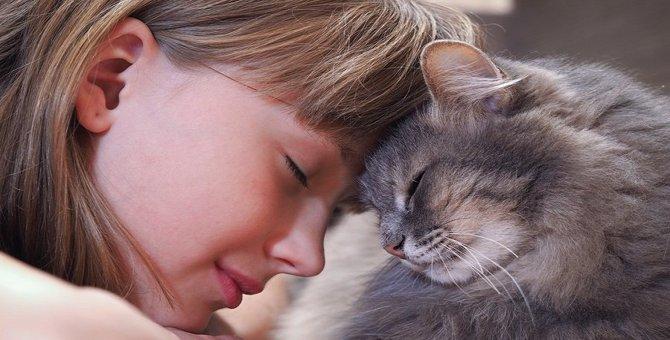 猫はスキンシップが大好き!仲良くなる3つの方法
