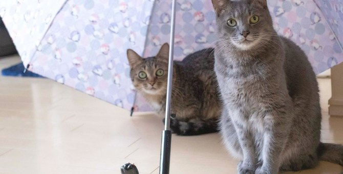 猫の健康に悪影響も!洗濯物の『部屋干し』対策5選