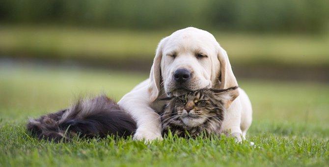 猫と犬どっちが賢いの?気になる猫の知性と記憶力について