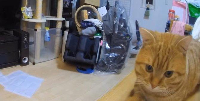 専用カメラを使って猫ちゃん達のお留守番を観察!