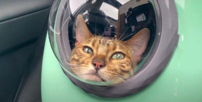 あご乗せスタイルでお昼寝♡車で移動中の猫さんたち