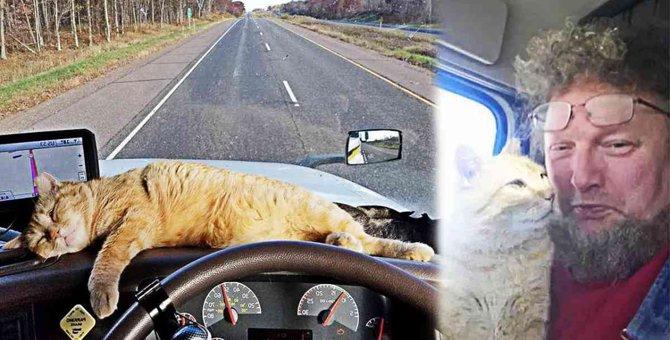 飼い猫を亡くしたトラック運転手…保護猫と出会い幸せなドライブへ!