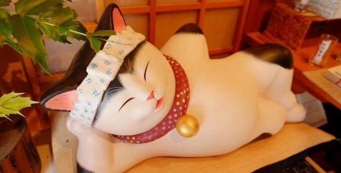 猫がいる旅館!全国おすすめランキングTOP3