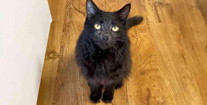 ガン治療を乗り越えた保護猫…自宅療養の元気な姿に感動!