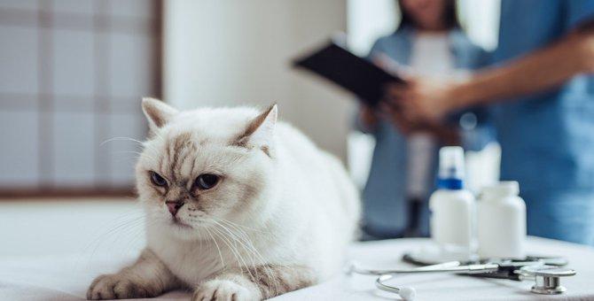 猫を『動物病院』に連れていく頻度は?年代別に最適な受診のタイミングを解説