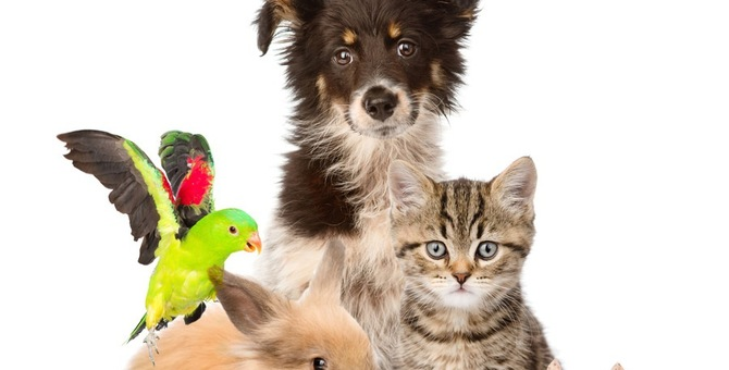 ローラさんが飼っている猫が可愛い!種類や名前
