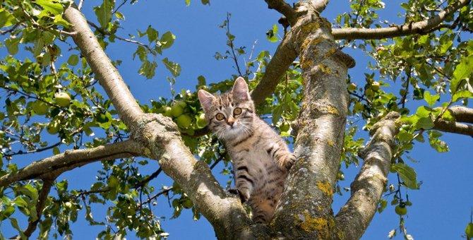猫の平衡感覚がすごいのはどうして?猫の体を徹底調査!