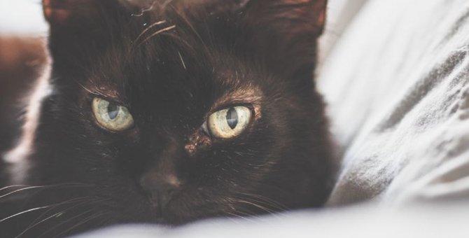 猫に『愛がないニャ…』と思われる飼い主がしている行動4つ