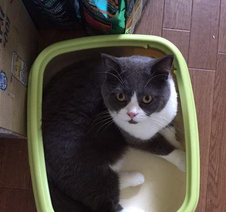 愛猫の好みはどれ?猫砂素材メリット・デメリット3つ