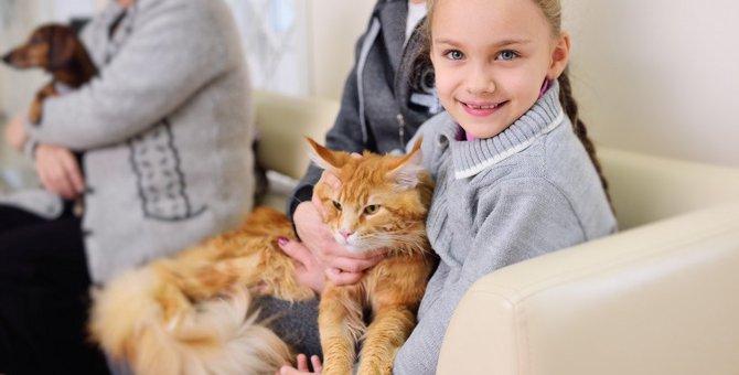『社交スキルが高い猫』に共通する3つのポイント!人馴れしてもらうためのコツとは?