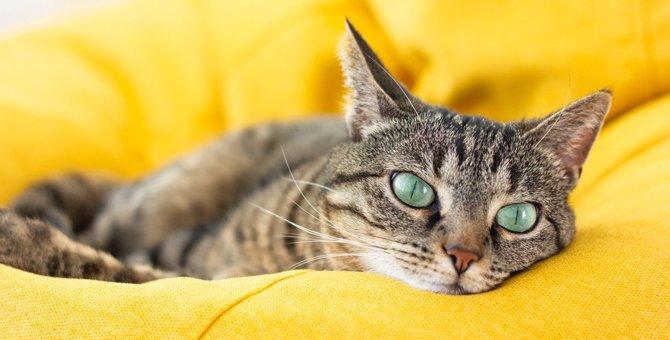 猫に飽きられる飼い主のダメ習慣4つ