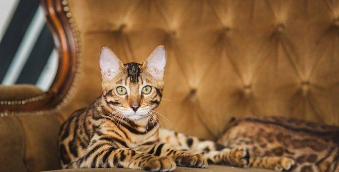 世界一高い猫は?高価な猫ベスト4