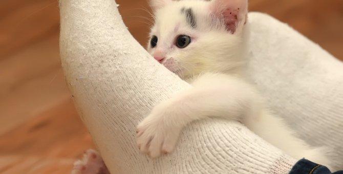 猫が飼い主の足を舐める心理