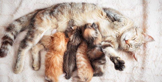 猫が食事中に『うみゃうみゃ』としゃべる理由3つ