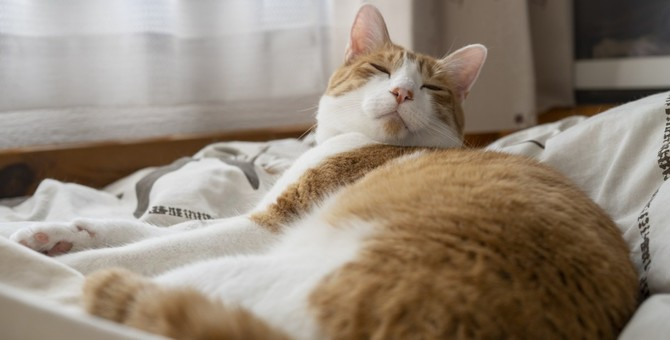 猫が布団でおしっこをしてしまう理由3つ!やめさせるためにやるべき対処法とは?