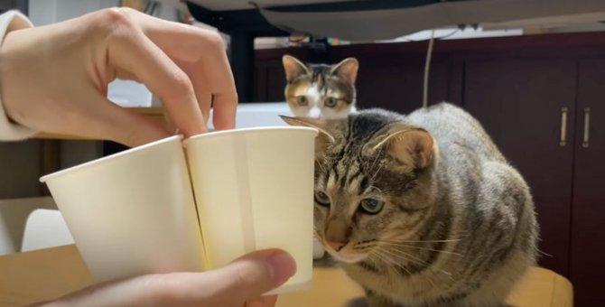 性格でこんなにも違う!猫ちゃんのシャッフルゲーム♪
