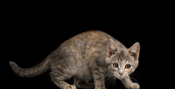 猫に『不信感』を抱かせる飼い主のNG行動5つ