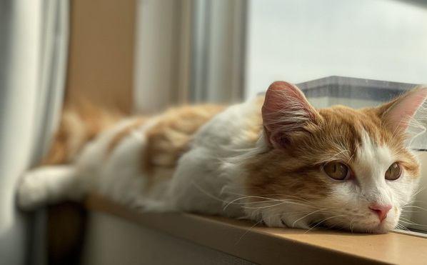 春こそ「猫の熱中症」に気を付けて!