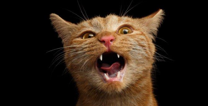 猫の『鳴く行為』にはこんな気持ちが隠れていた!2つの心理と注意すべき鳴き方を解説