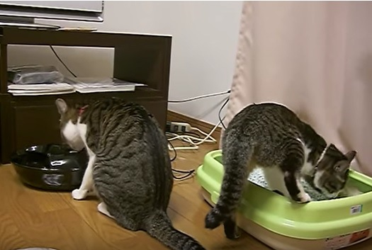 「トイレの掃除は任せるニャ!」トイレの後始末をしない猫の代わりにしてあげる猫が可愛い♡