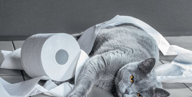 猫に浣腸する時の方法や便秘の解消法、予防まで