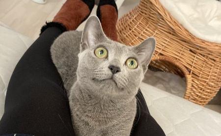 構いすぎはNG?!甘えん坊な猫に育てるための5つのテクニック