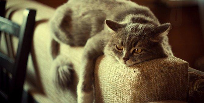 猫が『ストレスフル』になってしまう生活環境5選