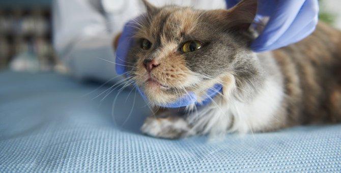 猫が痙攣を起こす原因と対処法