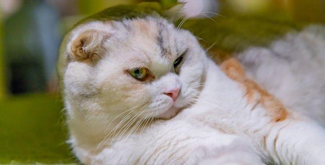猫が『本当につらい時』にしている行動5選!もしかしたら病気になっている可能性も?