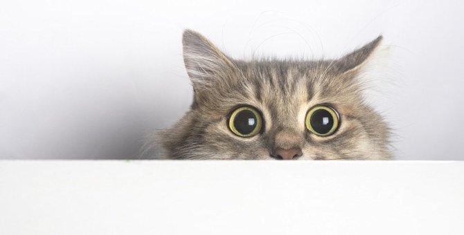 猫が『刺激的に感じること』つ5!飼い主の習慣や日常のワンシーンなど影響を受けやすいこととは?