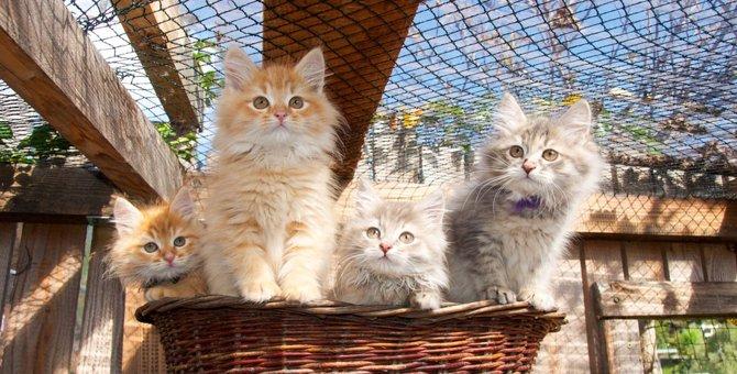 猫の近親交配について 異常の起こるリスクと注意点