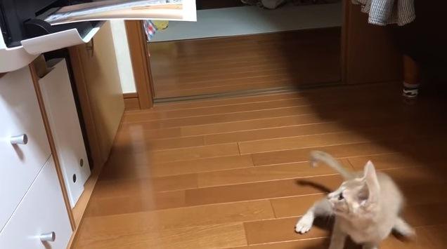 「何が出るかニャ?」プリンターに釘付けな子猫ちゃん!