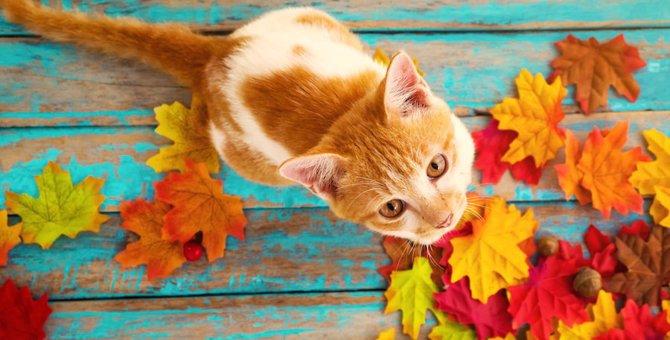 食欲の秋!猫と楽しめる秋が旬の食べ物7選