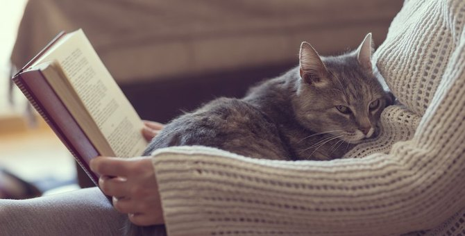 8ヶ月の猫を育てる方法 平均体重や食事、留守番させる方法