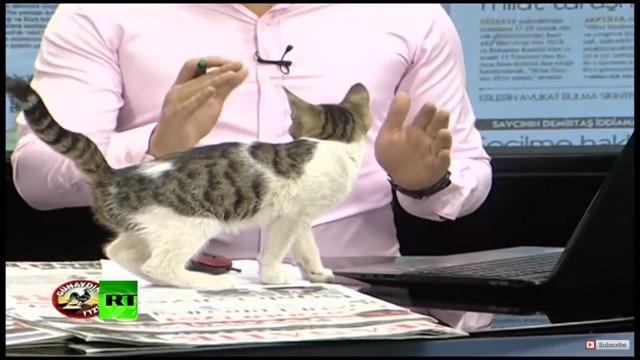 「続いてのニュースですニャ!」生放送に乱入する子猫