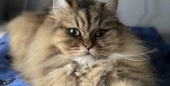 ヒゲから分かる猫の「本心」4つ
