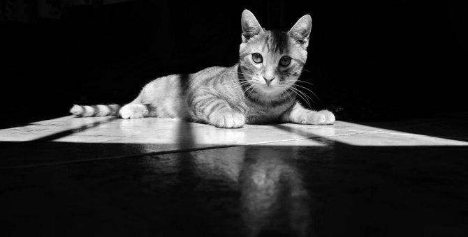 猫の殺処分の現実、原因や数を減らすには?