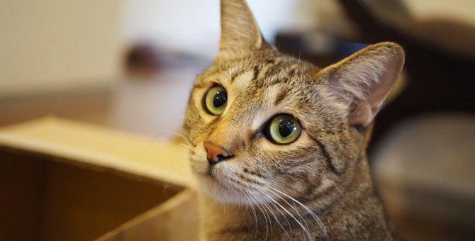 猫に試したい『大好き』の伝え方4選!愛情を示すベストタイミングとは?