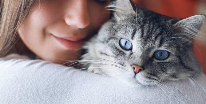 猫が死ぬまでに経験させたい5つの事