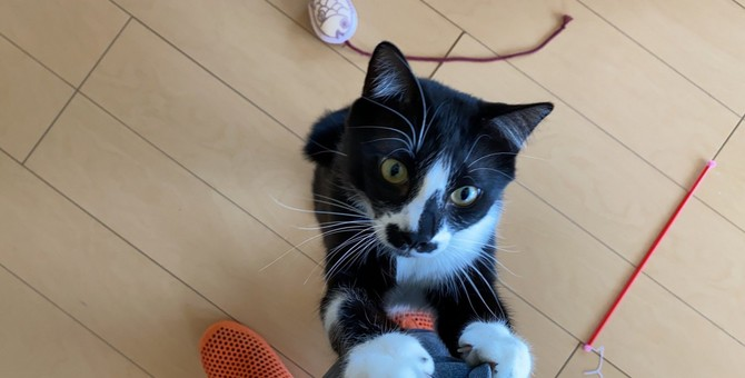 猫に『愛情』は伝えたほうがいい?愛情表現の方法3つとそのメリットを解説!